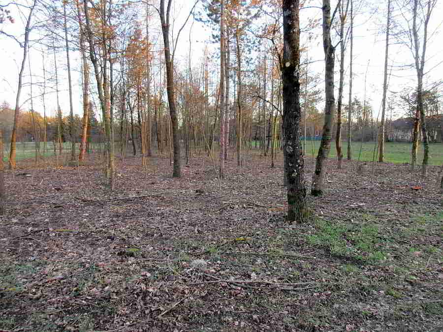 Wasserwald in LInz - Nach Abholzungen bleibt lichter Baumbestand und Totholz zurück