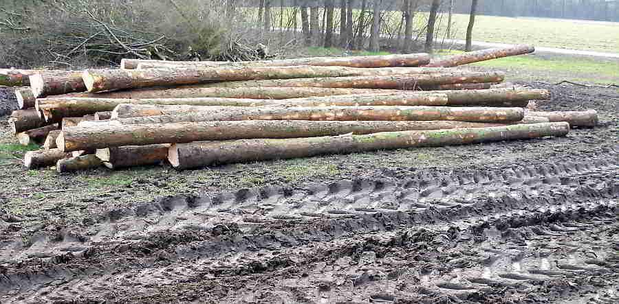Großes Abholzen im Erholungspark -Linz Wasserwald Linz AG
