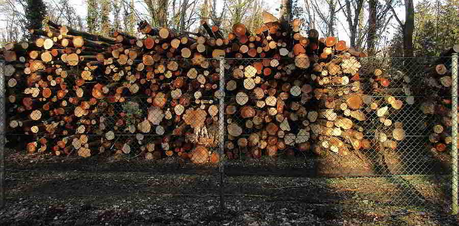 Großes Abholzen im Erholungspark - Linz Wasserwald Linz AG