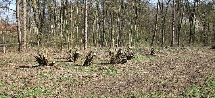 Linz Wasserwald - auch 2020 werden massiv Bäume gefällt und Sträucher umgeschnitten. Eine Ignoranz.