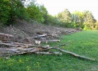 Wasserwald in Linz - Gefällte Bäume und Baumwied bleiben über Monate liegen