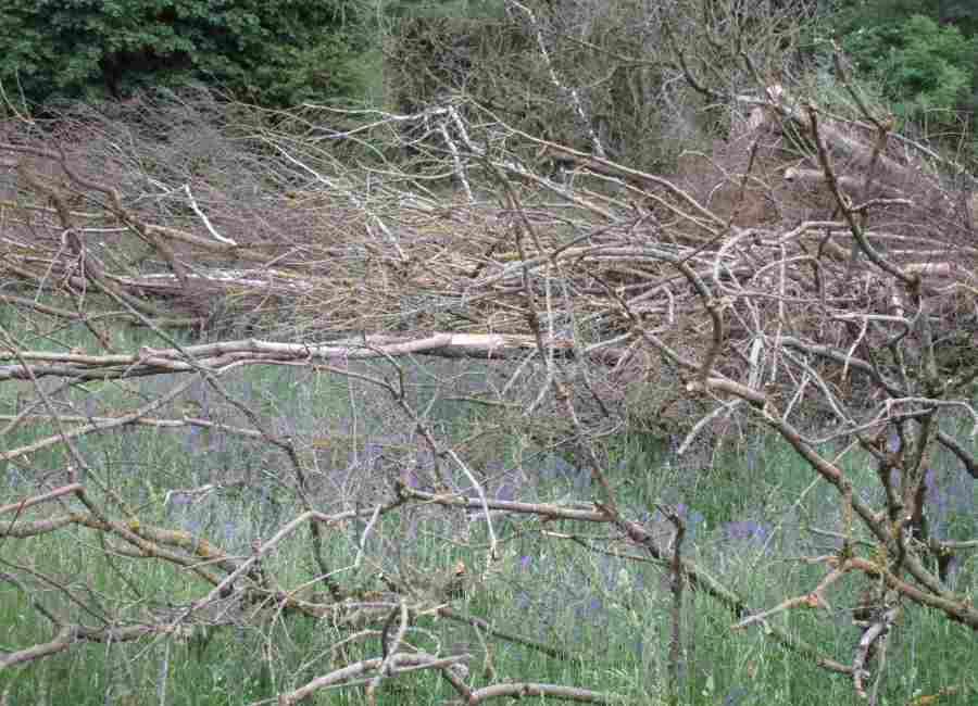 Wasserwald in Linz - Über Monate verrotten gefällte Bäume und Wied